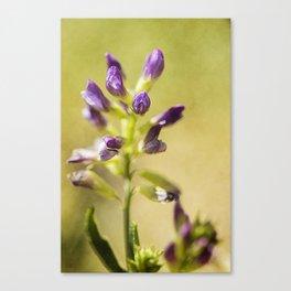 wild flower #119 Canvas Print