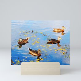 Ducks on a Pond Mini Art Print