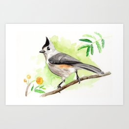 Watercolor Titmouse Art Print