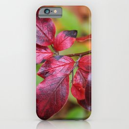 Deep Red Autumn Leaves iPhone Case