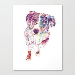 Multicolored Australian Shepherd red merle herding dog Canvas Print