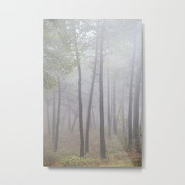 """""""Deep forest"""". looking for the sun .... Metal Print"""