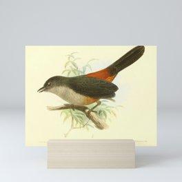 Scimitar winged Piha Mini Art Print