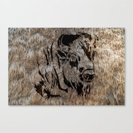 American bizon Canvas Print