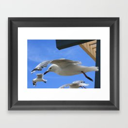 Gull company Framed Art Print