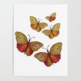 Summer Butterflies Poster