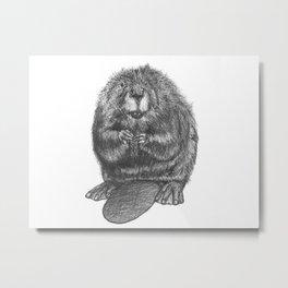 Beaver Metal Print