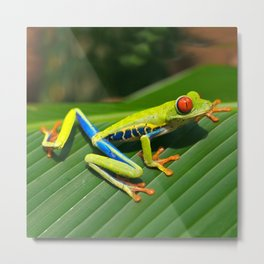 Green Tree Frog Red-Eyed Metal Print