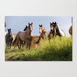 The Wild Bunch-Horses Canvas Print