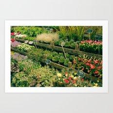 Marché Aux Fleurs Art Print