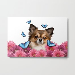 Chihauhau Dog with blue Morph Butterfloies and Gerbera Flowers Metal Print