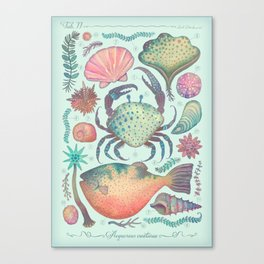 Marine Creatures II Canvas Print