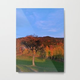 Old tree in indian summer evening | landscape photography Metal Print