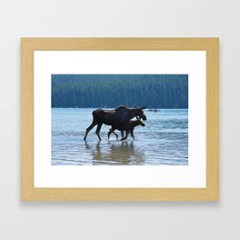 Mother moose & calf at Maligne Lake in Jasper National Park Framed Art Print