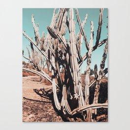 Desert Cactus Photography | Cacti Nature Canvas Print