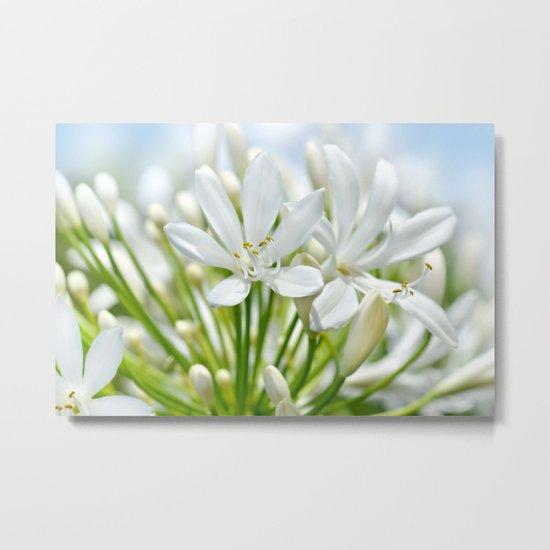 White flower macro 034 Metal Print