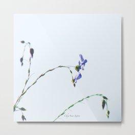 Blue Flax highkey SOOC by CheyAnne Sexton Metal Print