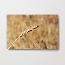 Wheat Stalk Photography Print Metal Print
