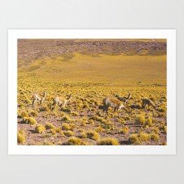 Vicuñas in the Desert, San Pedro de Atacama, Chile Art Print
