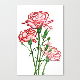 pink and red carnation watercolor painting Canvas Print