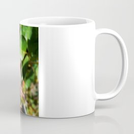 Natural Beauty • Point Defiance Rose Gardens • Tacoma, WA Coffee Mug