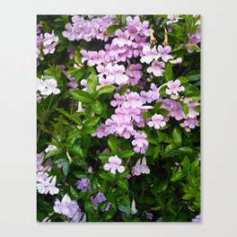 Violet Trumpets Canvas Print
