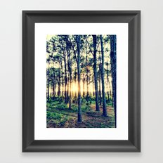 Golden Light Framed Art Print