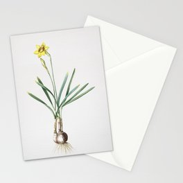 Vintage Narcissus Gouani Illustration Stationery Cards