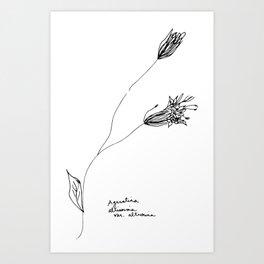 Ageratina altissima var. altissima Art Print
