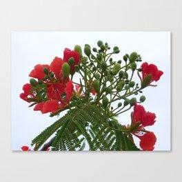 A Blossom from Haiti Canvas Print