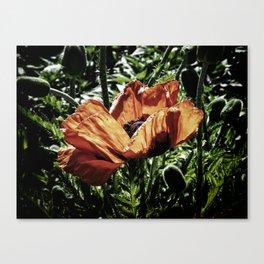 Hidden Beauty Canvas Print