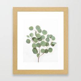 Eucalyptus Branch Framed Art Print