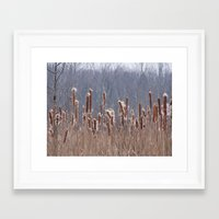 furry Framed Art Prints featuring Furry Cattails by DanByTheSea
