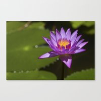 lotus flower Canvas Prints featuring Lotus by Maria Heyens