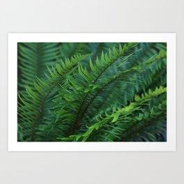 Beautiful Ferns Art Print