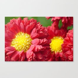 Beauty in Bloom 9 Canvas Print