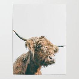 Majestic Highland cow portrait Poster