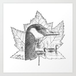 Canada Goose on Maple Leaf Art Print