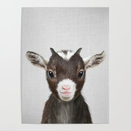 Baby Goat - Colorful Poster