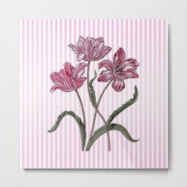 Maria Sibylla Merian: Three Tulips Metal Print