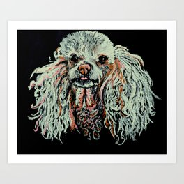 Toy Poodle portrait Art Print
