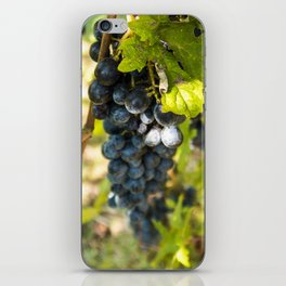 Grapes on the Vine iPhone Skin