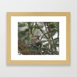 Fledgling in the Nest Framed Art Print