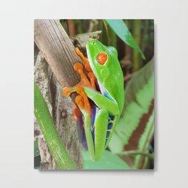 Costa rica wild nature red eye frog Metal Print