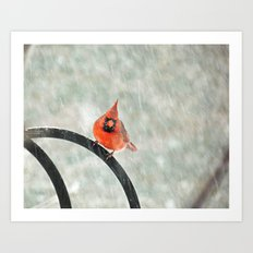 Male Cardinal in the Snow Art Print