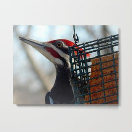 Pileated woodpecker at Grammy's house! Metal Print