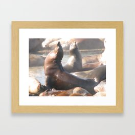 Sun Basking Framed Art Print