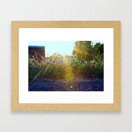 Flowers at Sunset  Framed Art Print