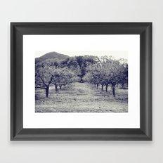 apple orchard Framed Art Print