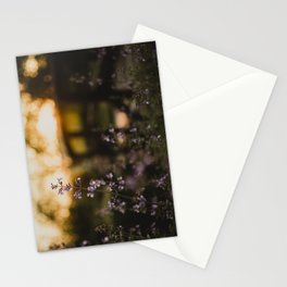 Sunset Walk Stationery Cards